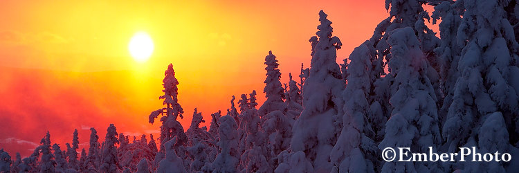 Spruces-at-Sunrise-Pan